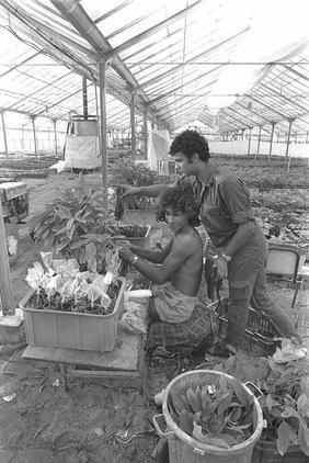אהוד הלוי במשתלה, 1975.