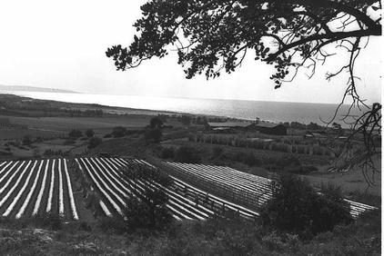 נוף לים מעל שדות חקלאים, 1962.