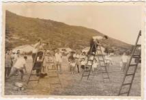 """שבועות 1960, צילם: אורי לבנוני ז""""ל"""